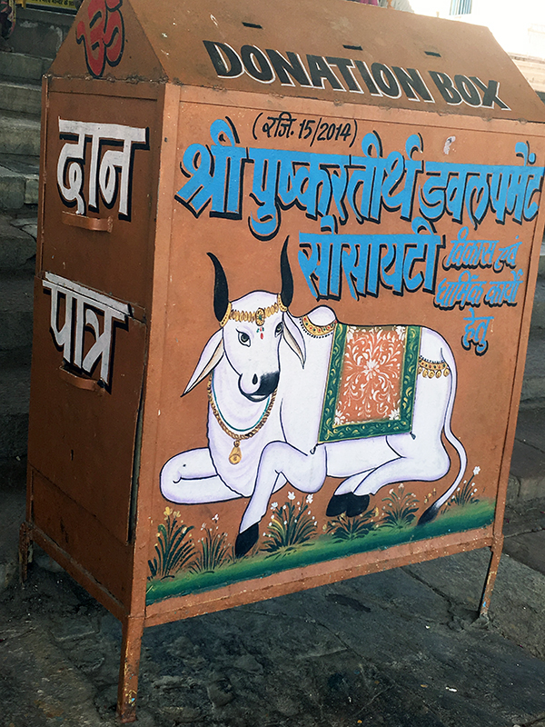 holy cow_box